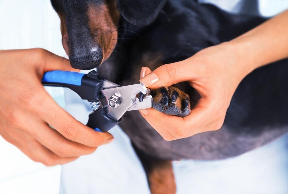 Для хорошего собачьего педикюра совсем необязательно скупать половину зоомагазина