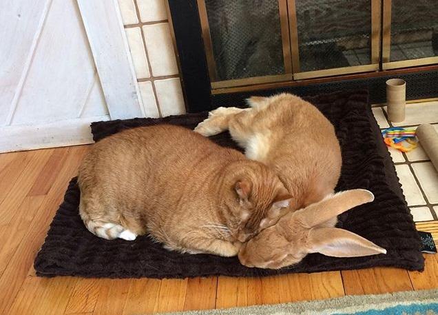 Друзья спят вместе