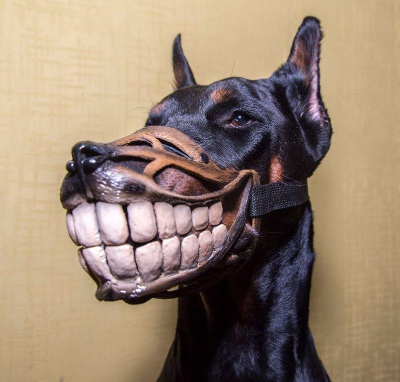 Если владелец сможет избежать ошибок, собака быстро привыкнет к наморднику