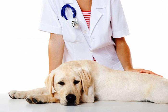 Если вы заметили, что пёс кормится в кошачьем лотке, следует обязательно показать его ветеринару