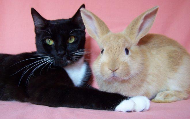 Если животные подружились, то это навсегда