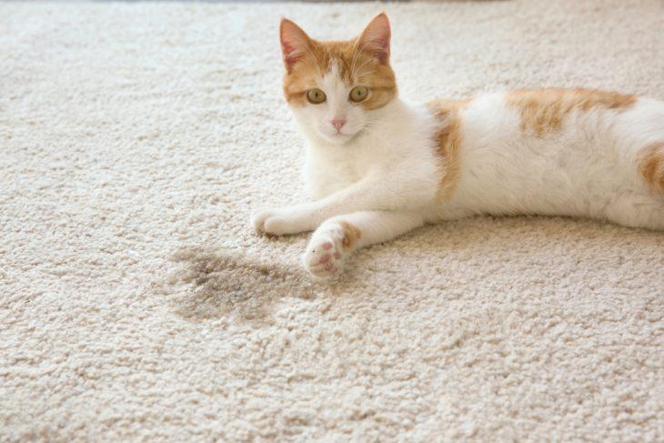 Если котенок сделал лужу, его нельзя бить и ругать