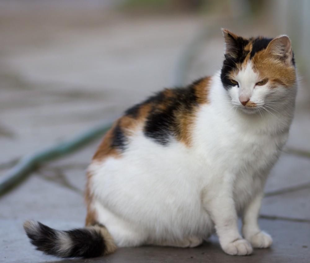 Если кошка здорова, появление котят на свет должно пройти нормально