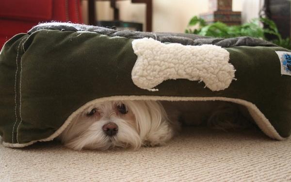 Если однажды собака была травмирована во время стрижки когтей, последующие сеансы будут даваться ей с трудом