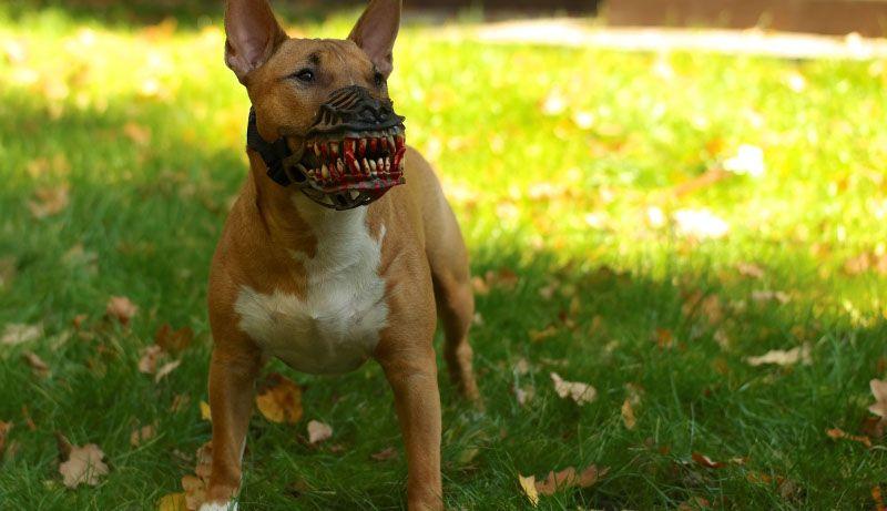 Если применять насилие, собака может проявить агрессию