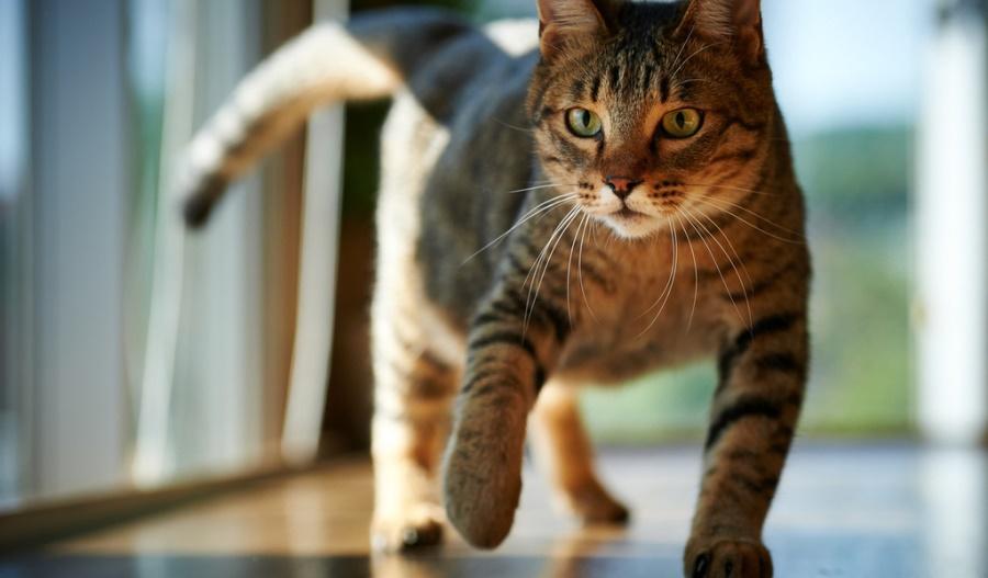 Желание вновь встретиться с котом может приводить даже к слуховым и визуальным миражам его присутствия