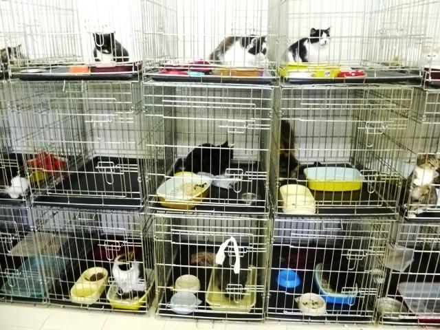 Животное можно отдать в приют