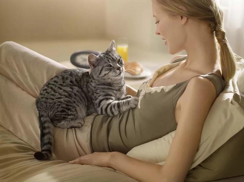 А как понять, что кошка беременна?