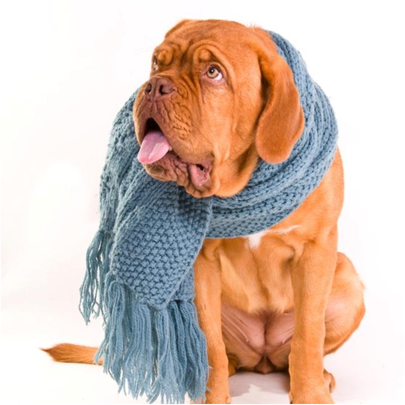 Заболеть бронхитом может собака любого возраста, но чаще этому заболеванию подвержены ослабленные животные
