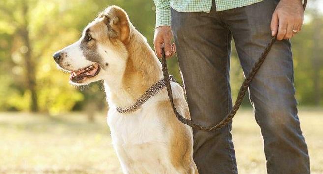 Забота и внимание, оказываемые псу, помогут на долгие годы забыть о болезненных проявлениях экземы