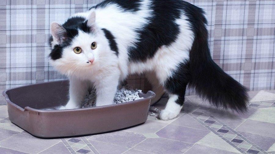 Закапывая свои отходы, кот обеспечивает себе безопасность