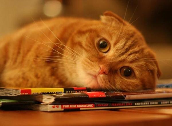 За внешней холодностью котов скрываются ранимость и чувствительность к происходящему