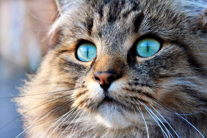 Знание возраста кота позволяет эффективнее следить за его самочувствием
