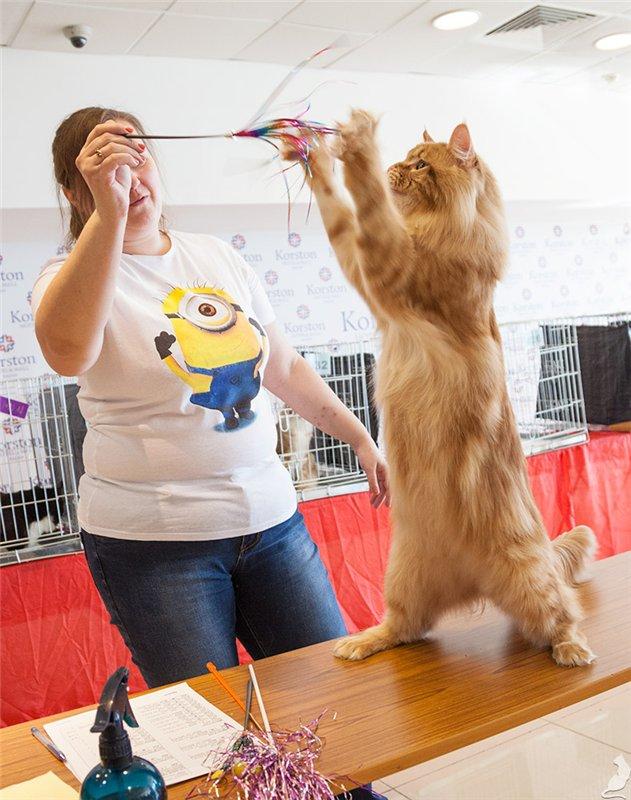 Играть с кошкой нужно по полчаса в день и больше