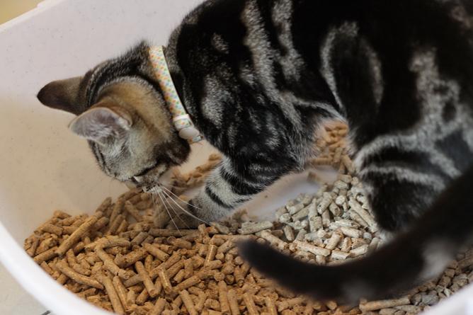 Игровое поведение проявляется у кота по отношению к самым разным предметам в доме