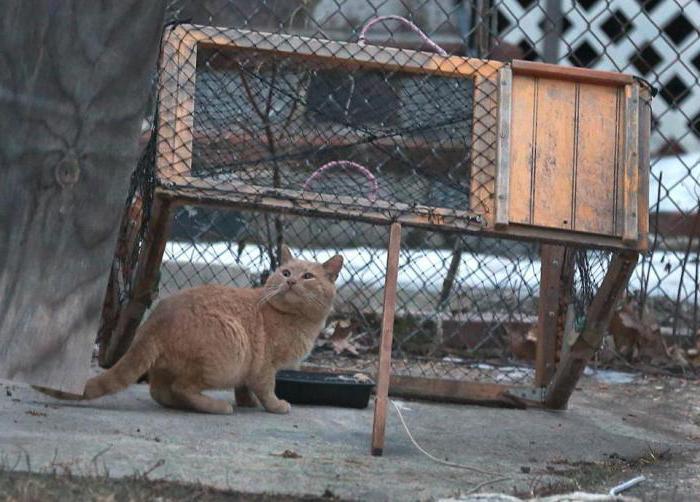 Изловить кошку можно при помощи простых конструкций