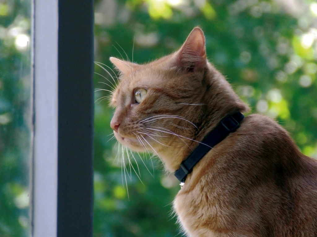 Из-за специфики теплообмена температура кошек колеблется в течение всего дня