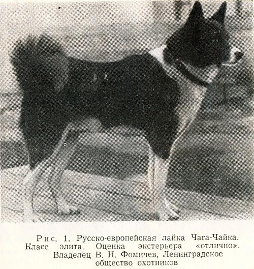 Иллюстрация из книги «Охотничьи лайки»