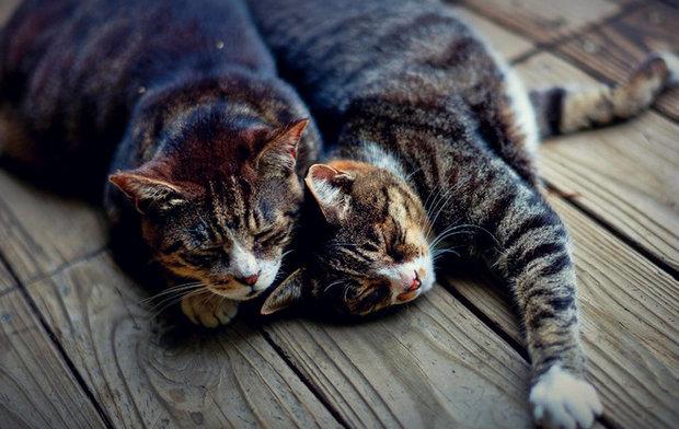 Иногда кошку оставляют с партнером на 2 дня