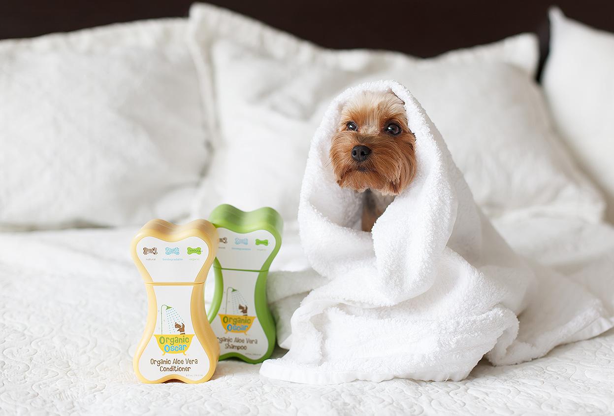 Иногда к экземе могут приводить средства, призванные ухаживать за шерстью и кожей собак