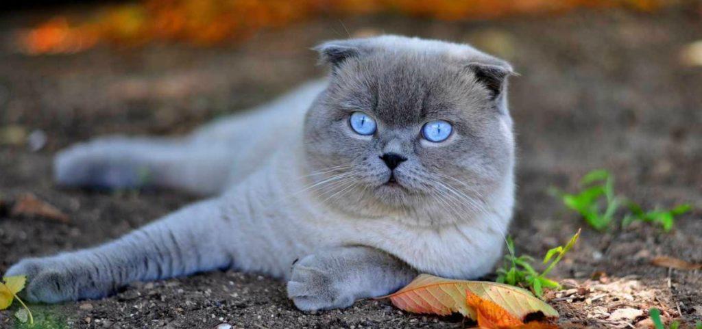 """Иногда породистость котов лежит """"на поверхности"""", иногда она не имеет ярко выраженных опознавательных деталей"""