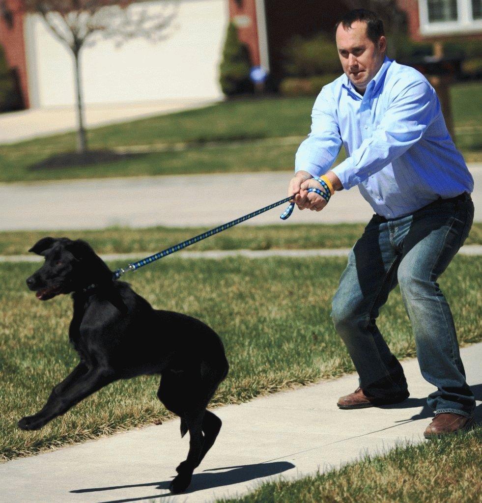 Иногда приходится прилагать большое усилие, чтобы остановить пса