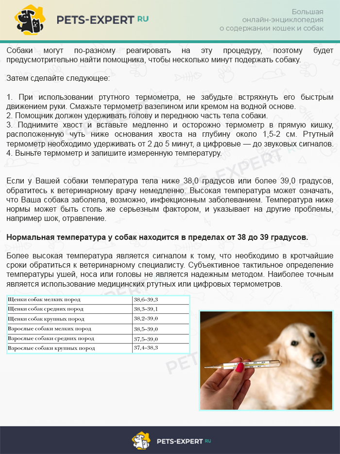 Инструкция о том, как померить температуру у собаки