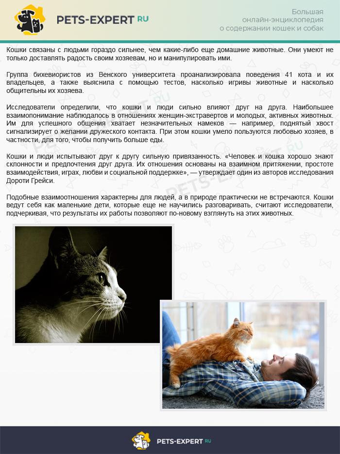 Интересный факт о взаимоотношениях кошек и людей