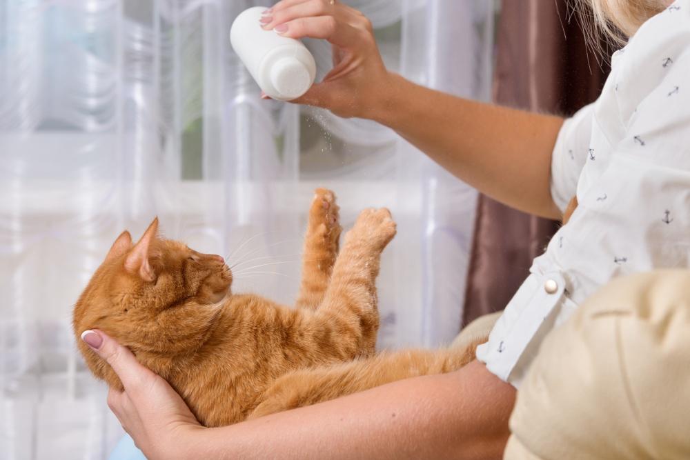 Использование сухого шампуня для мытья взрослой кошки