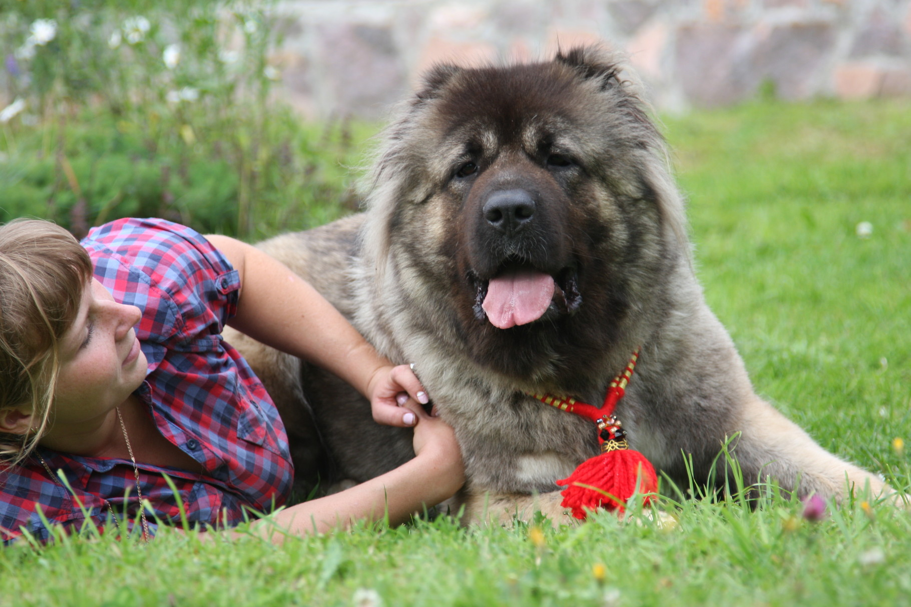 Кавказская овчарка с любимой хозяйкой