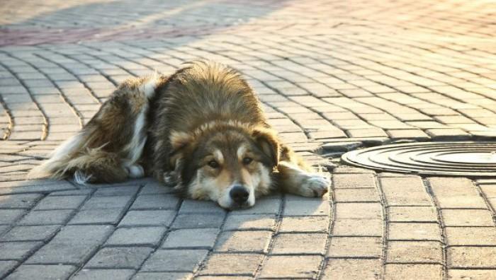 Каждый день бездомным собакам приходится выживать, превозмогая себя, что удается не всем особям