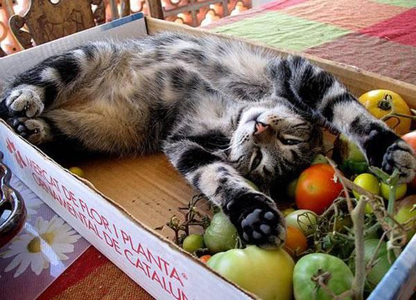 Какие бы экзотические предпочтения в пище ни были у вашего кота, важно грамотно под них подстроиться