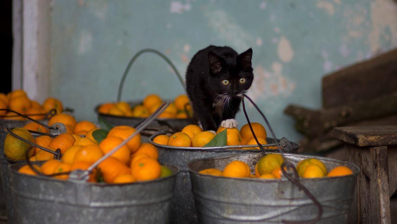 Чем отпугнуть кошек от растений Какой запах может отпугнуть кошек