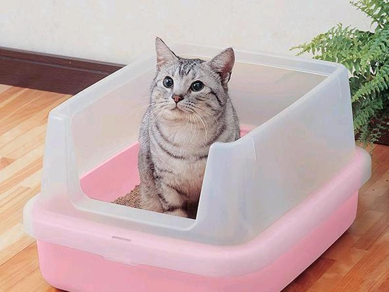 Какой наполнитель для кошачьего туалета лучше