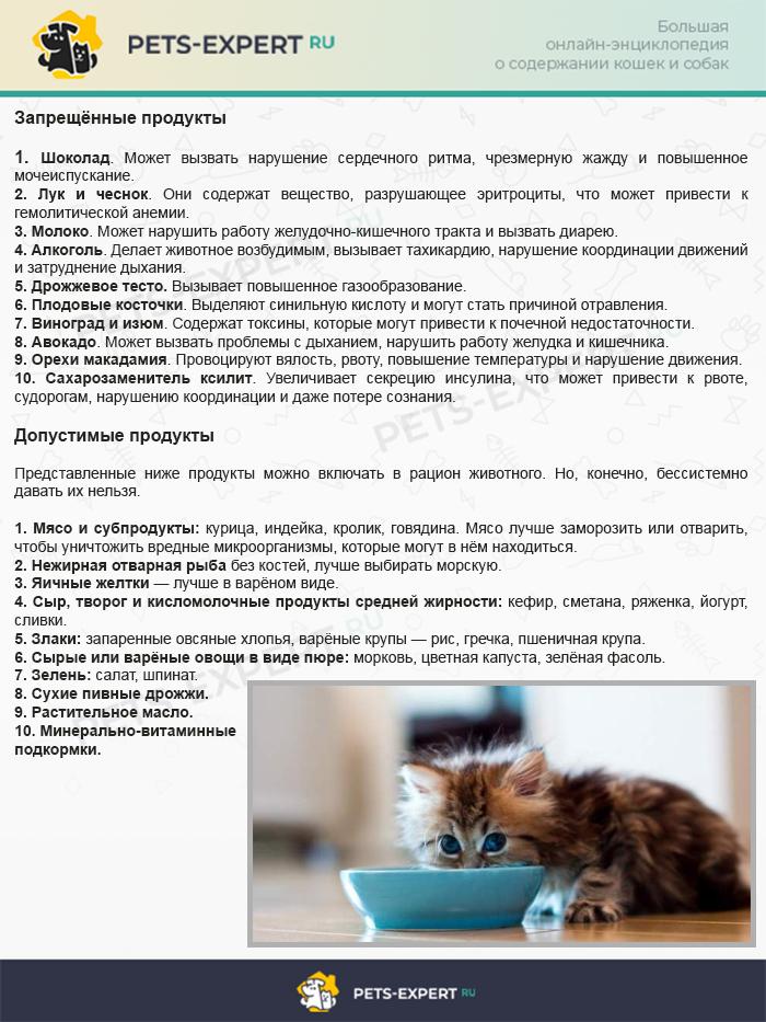 Как кормить кошку натуральным кормом