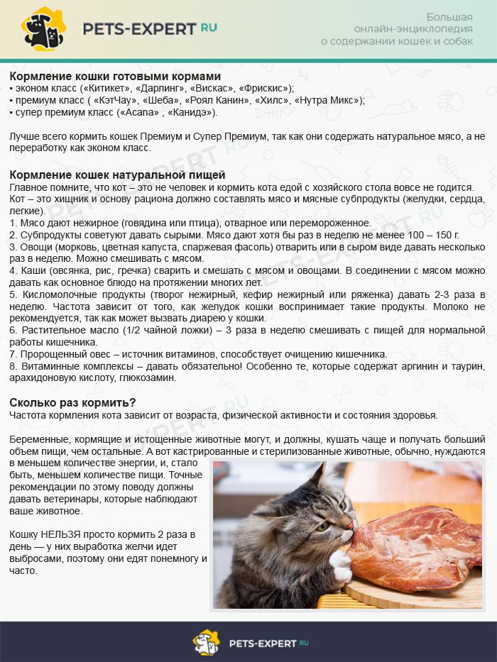 Как кормить кошку