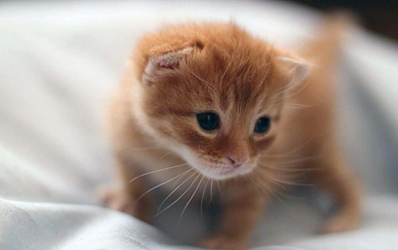Как определить возраст этого котёнка?