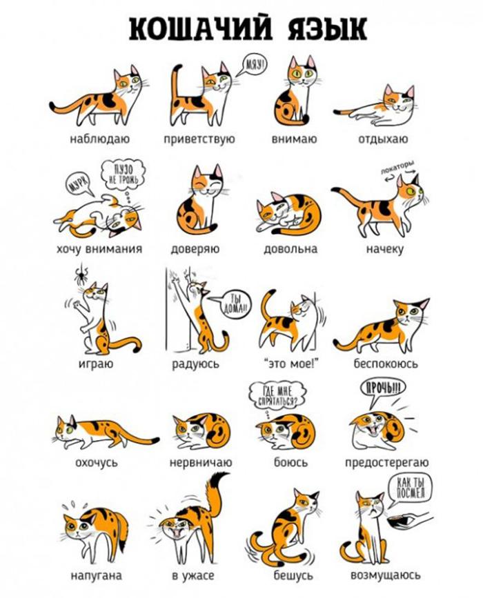 Как определить настроение кота