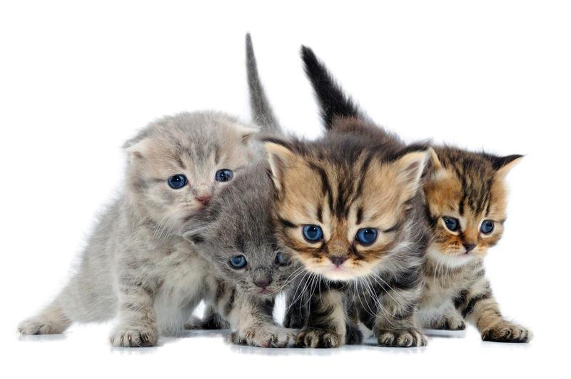 Яйца у маленьких котов