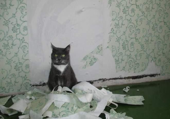 Как отучить кота или кошку драть обои и мебель работающие способы