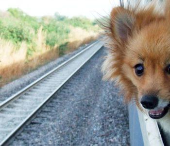 Как перевозить собаку в поездах по России