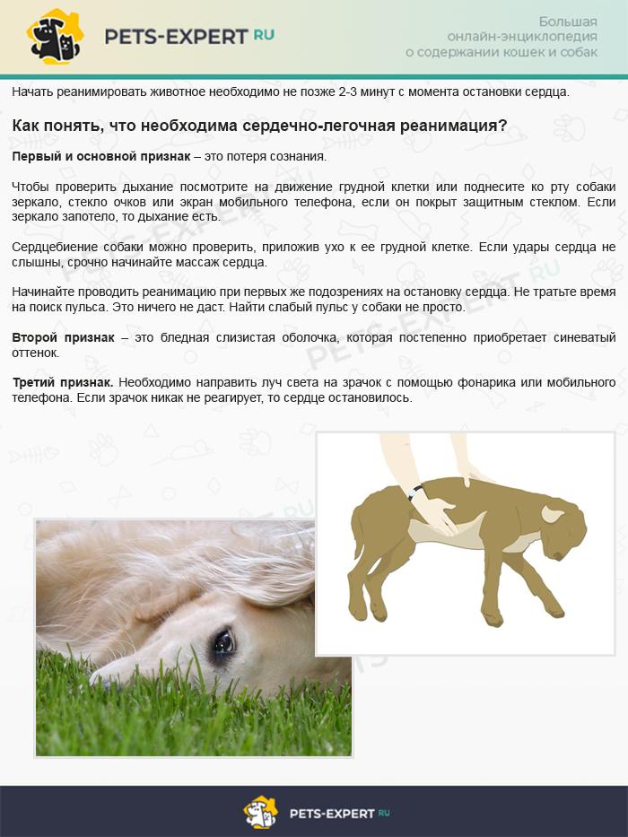 Как понять, что собаке необходима сердечно-легочная реанимация