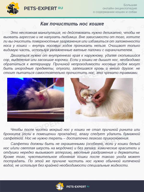 Как почистить нос кошке