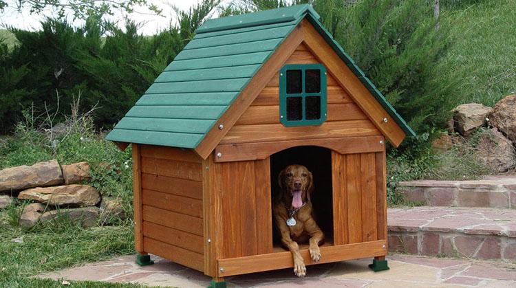Как приучить собаку из квартиры жить во дворе