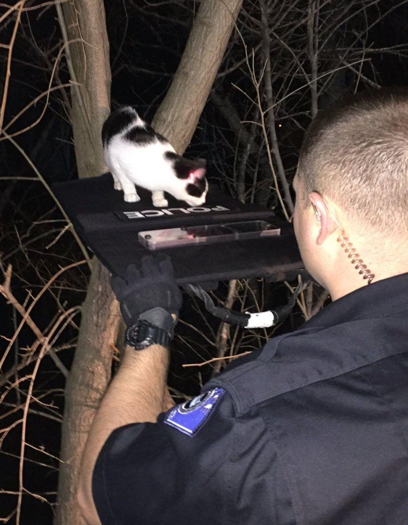 Как снять кота с дерева? Опыт американских полицейских