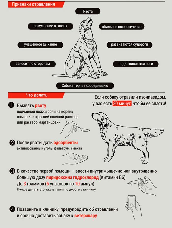 Как спасти собаку от отравления