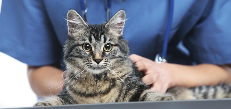 Кастрация поможет значительно облегчить жизнь коту