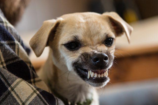 Категорически запрещается трогать или гладить агрессивную собаку