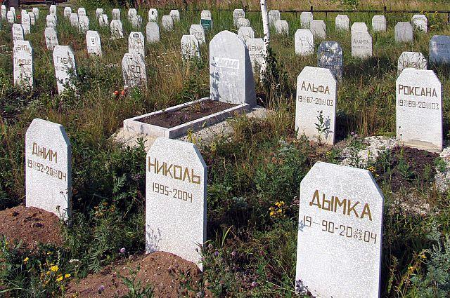 Кладбища домашних животных расположены, как правило, в больших городах