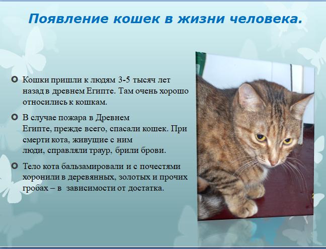 Когда кошки появились в жизни человека